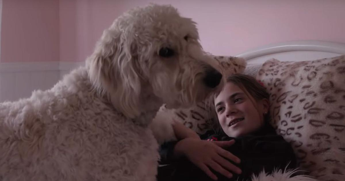 'Dogs' trailer: A Netflix docu-series shows the many reasons why canines and humans are best friends