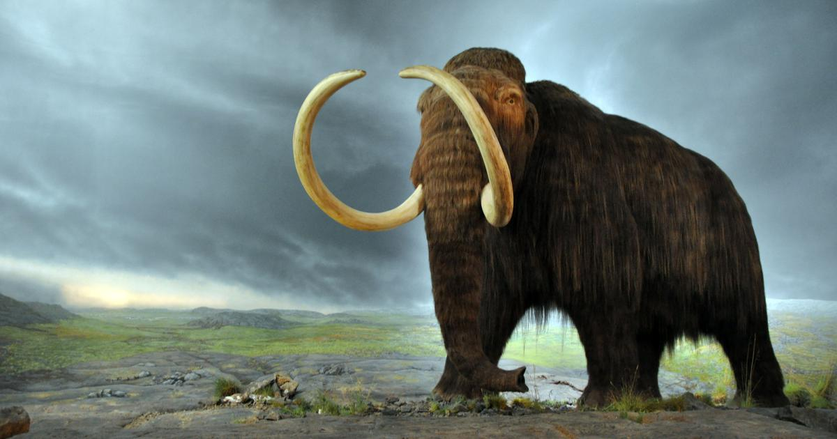 Scientists are trying to resurrect extinct animals with gene technology. Is it a good idea?