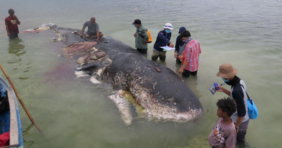 Indonesia: Over 1,000 plastic items including flip-flops found in dead sperm whale's stomach