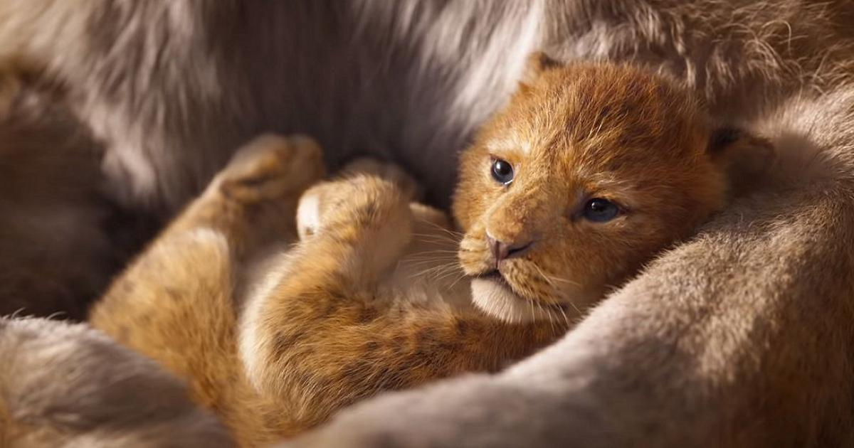 Meet Simba (the Hollywood one) in the first look from 'The Lion King'