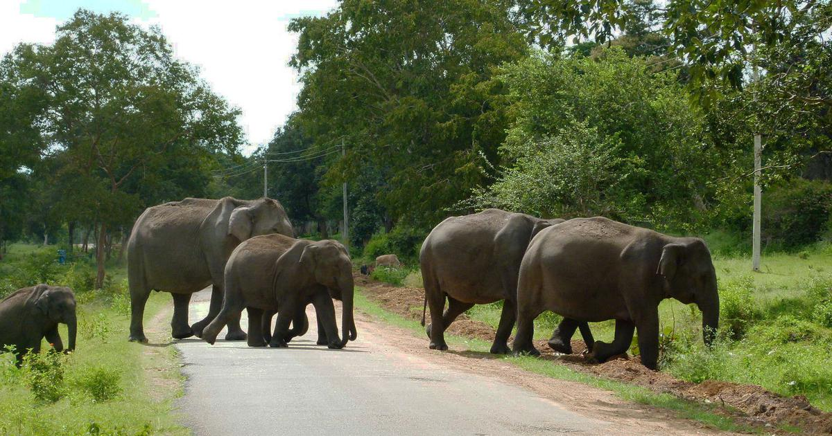 Centre's push for wider, busier roads in Karnataka's Protected Areas threatens precious wildlife