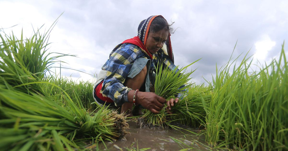India's agriculture sector has survived the pandemic. But will it survive climate change?
