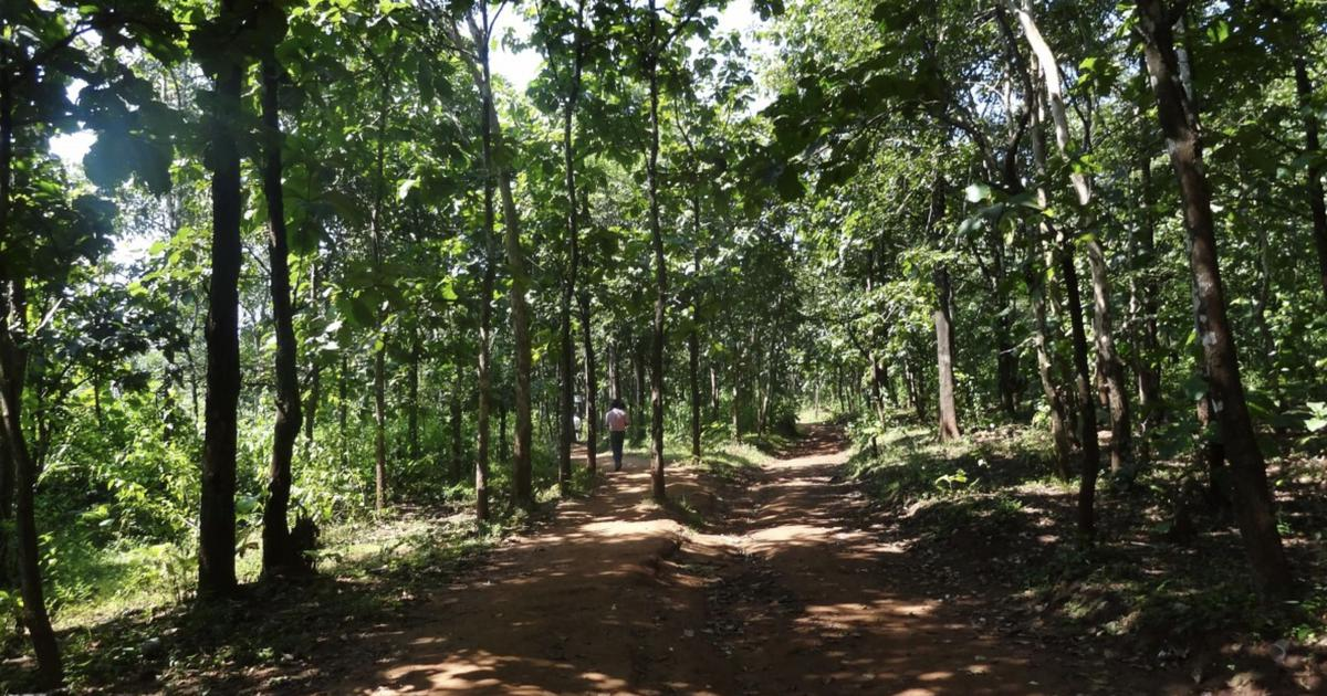 In three years, Centre has diverted forest land the size of Kolkata for development projects