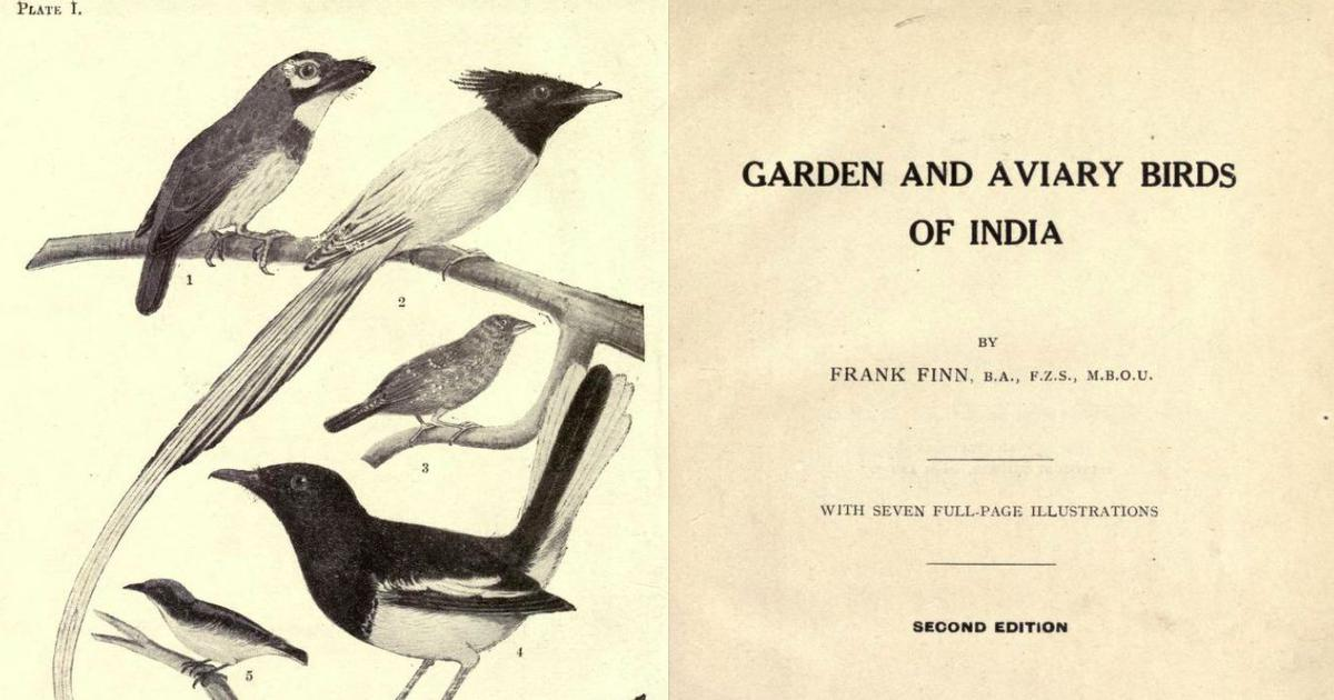 What colonial writing about Indian birds reveals about the British Raj