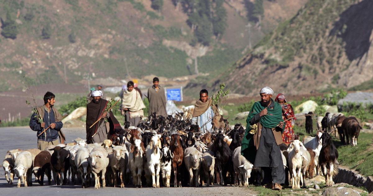 tribes of jammu and kashmir