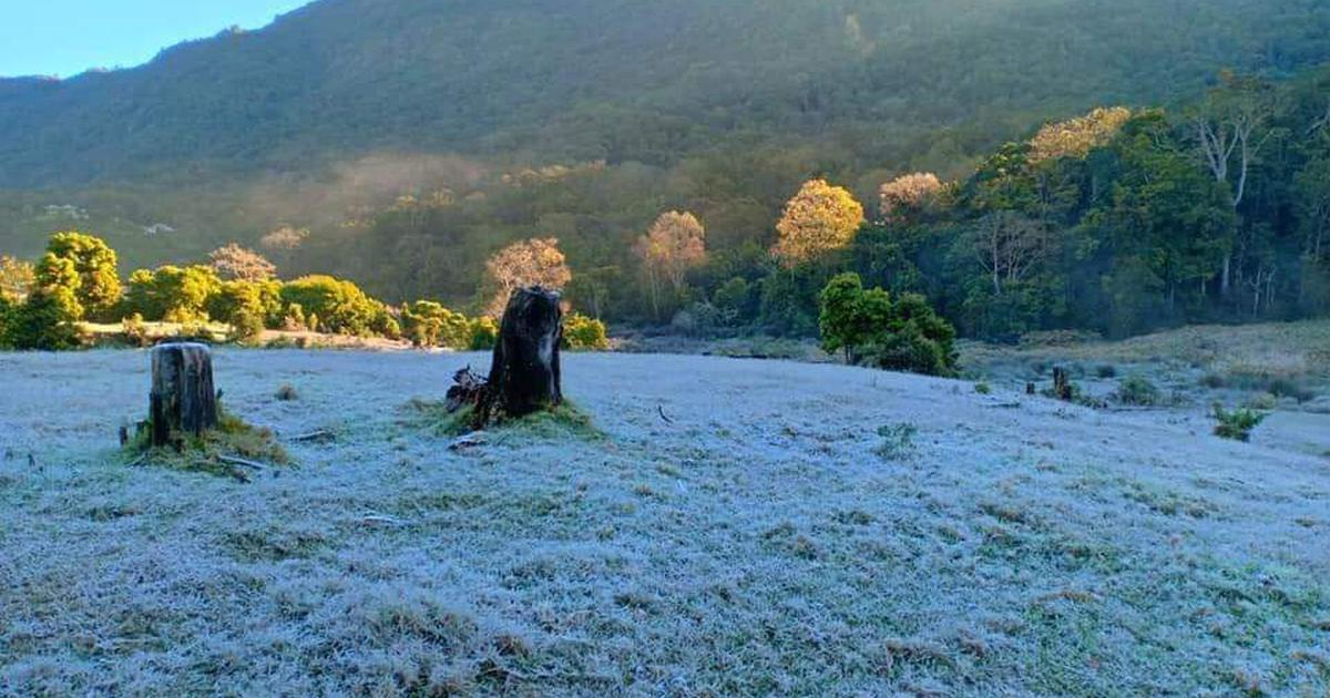 Kerala: Frost in Munnar as temperature dips in the hills, tea plantations affected