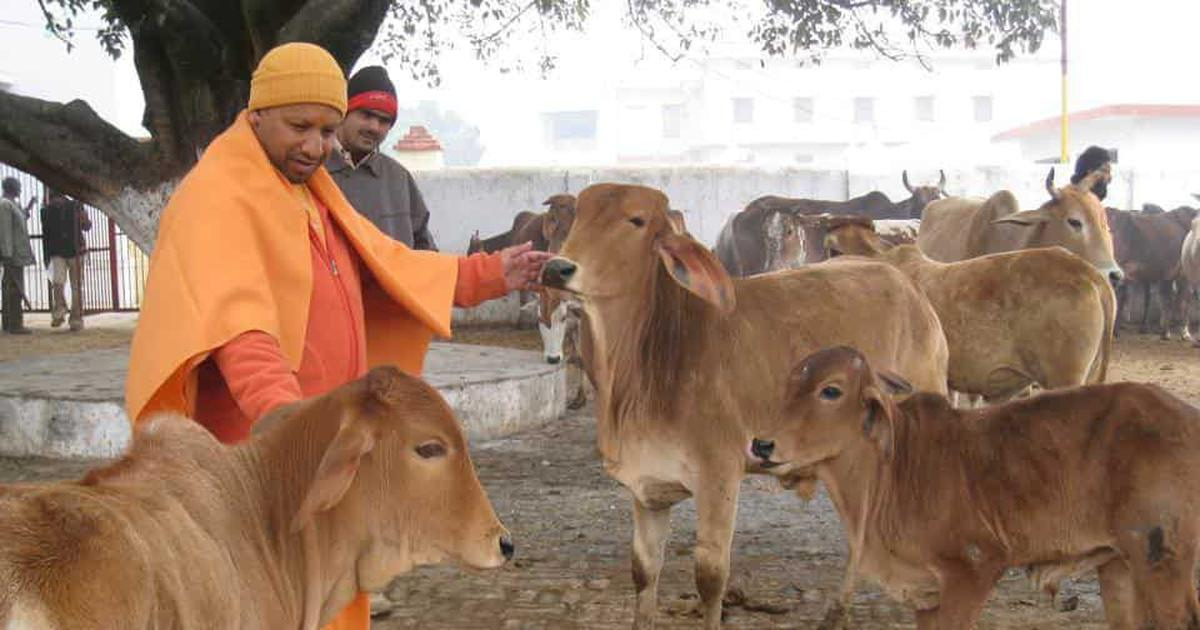 Uttar Pradesh Budget: Rs 447 crore allocated for cow shelters by Adityanath government
