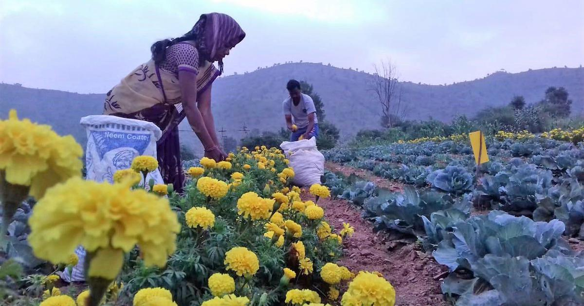 Farmers or corporates: Who benefits from Andhra Pradesh's natural farming project?