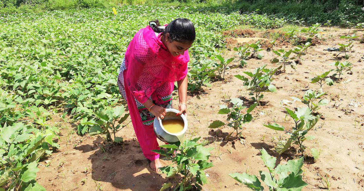 Can Andhra Pradesh's ambitious plan to stop the use of chemicals in farms succeed?