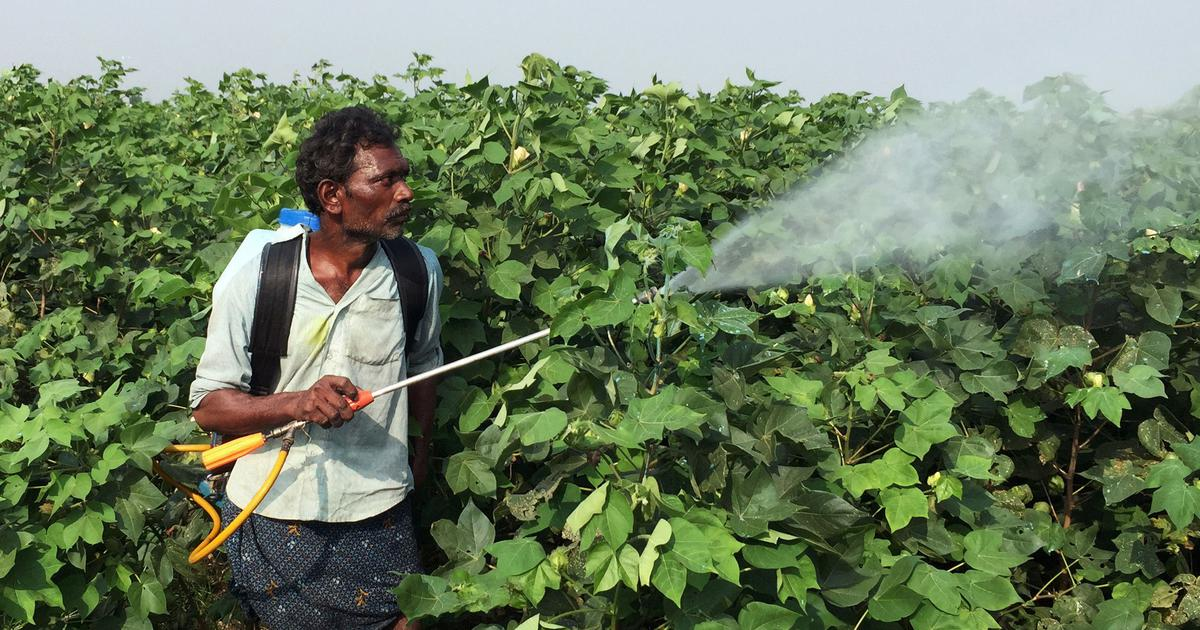 Kerala's farm labourers are paying for excessive pesticide use with their health – and lives
