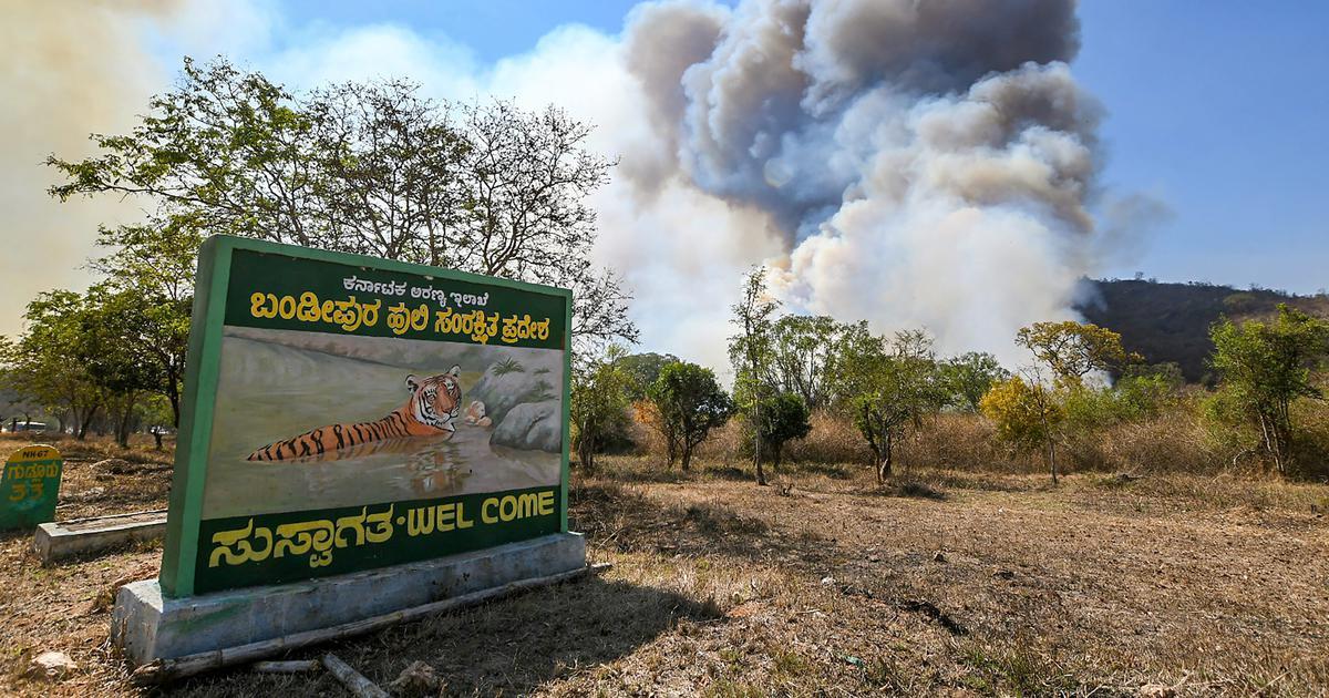 Karnataka: Major fire in Bandipur Tiger Reserve destroys hundreds of acres of forest area