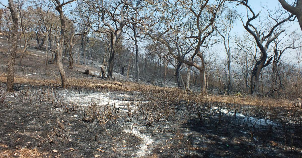India's understanding of forest fires has been skewed by colonial-era policy