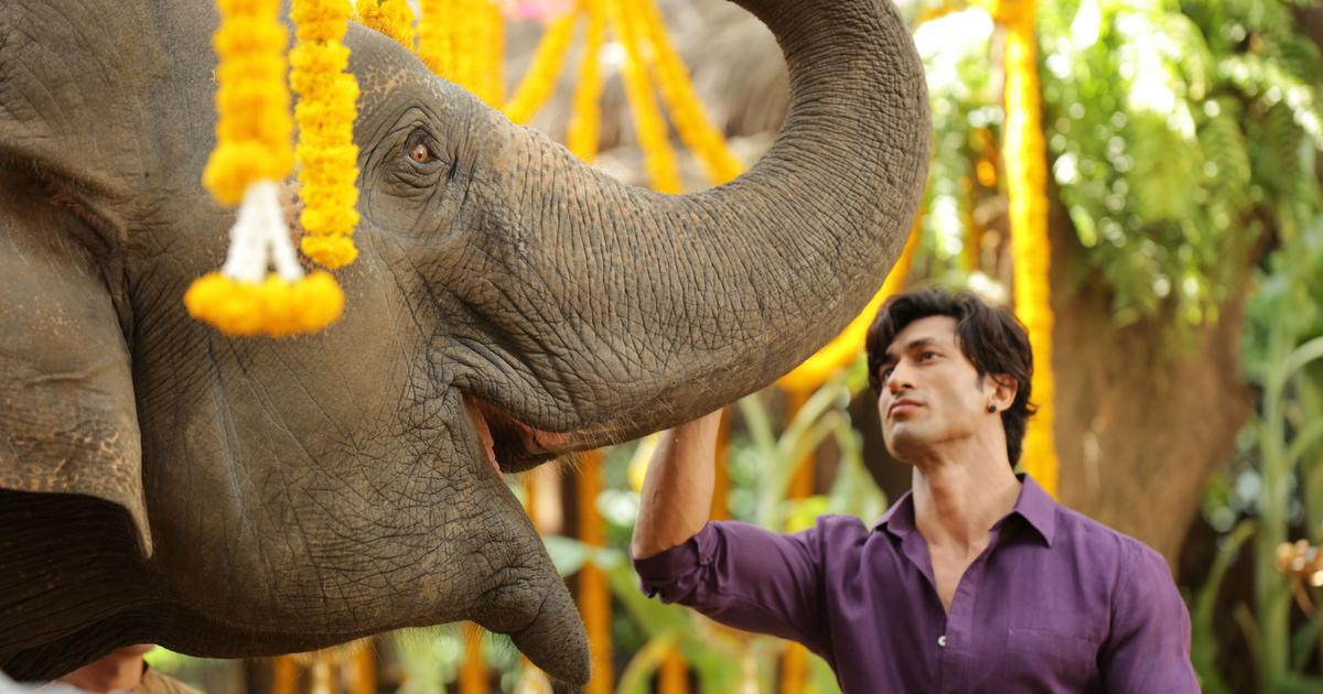 Happy elephants equals happy performances: Hollywood director Chuck Russell on 'Junglee'