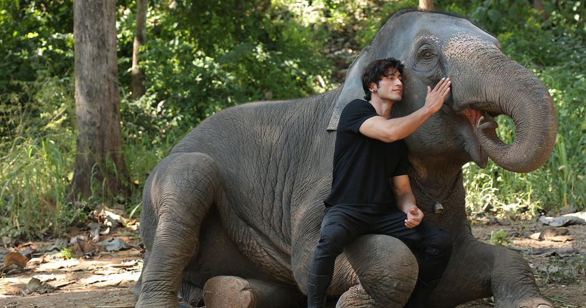 Junglee' movie review: Vidyut Jammwal leaps to the rescue of