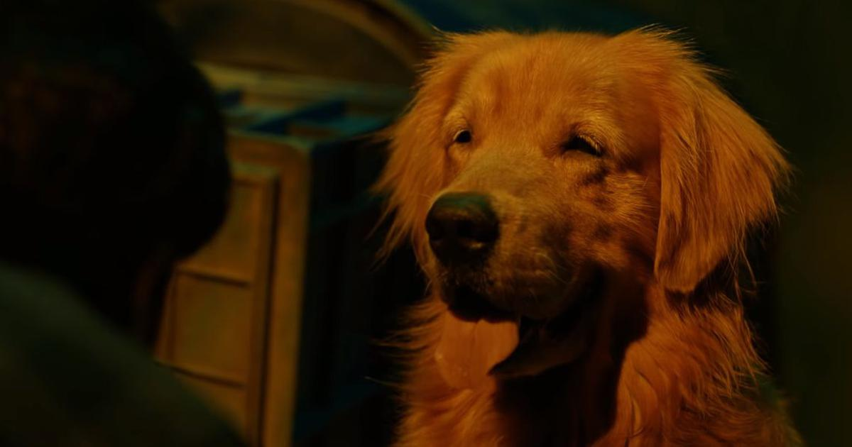 Meet Bruno from 'Watchman' movie: 'Once people watch him, they are going to want to adopt dogs'