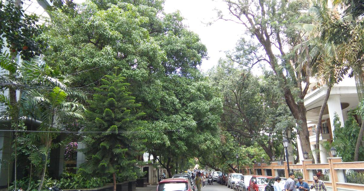 This book is a fascinating walk through the lives of Indian cities told through their trees