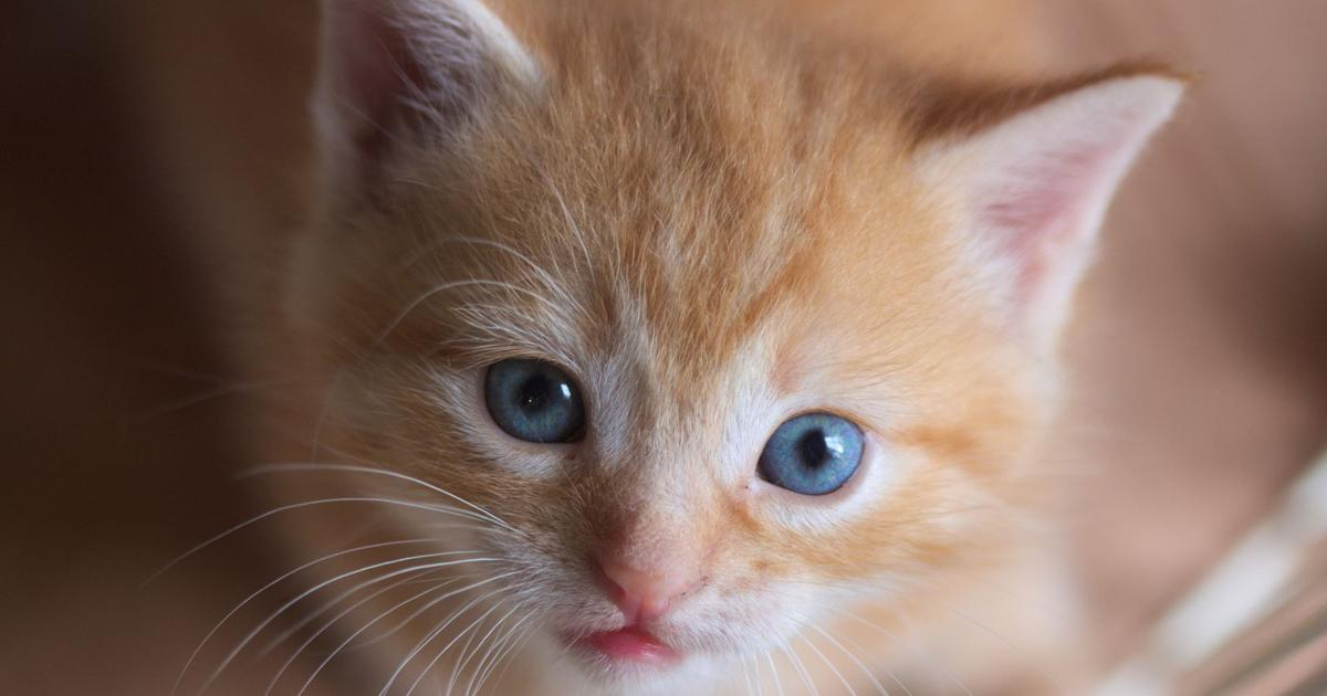 Paws and laws: Is it ethical for you to keep a pet?