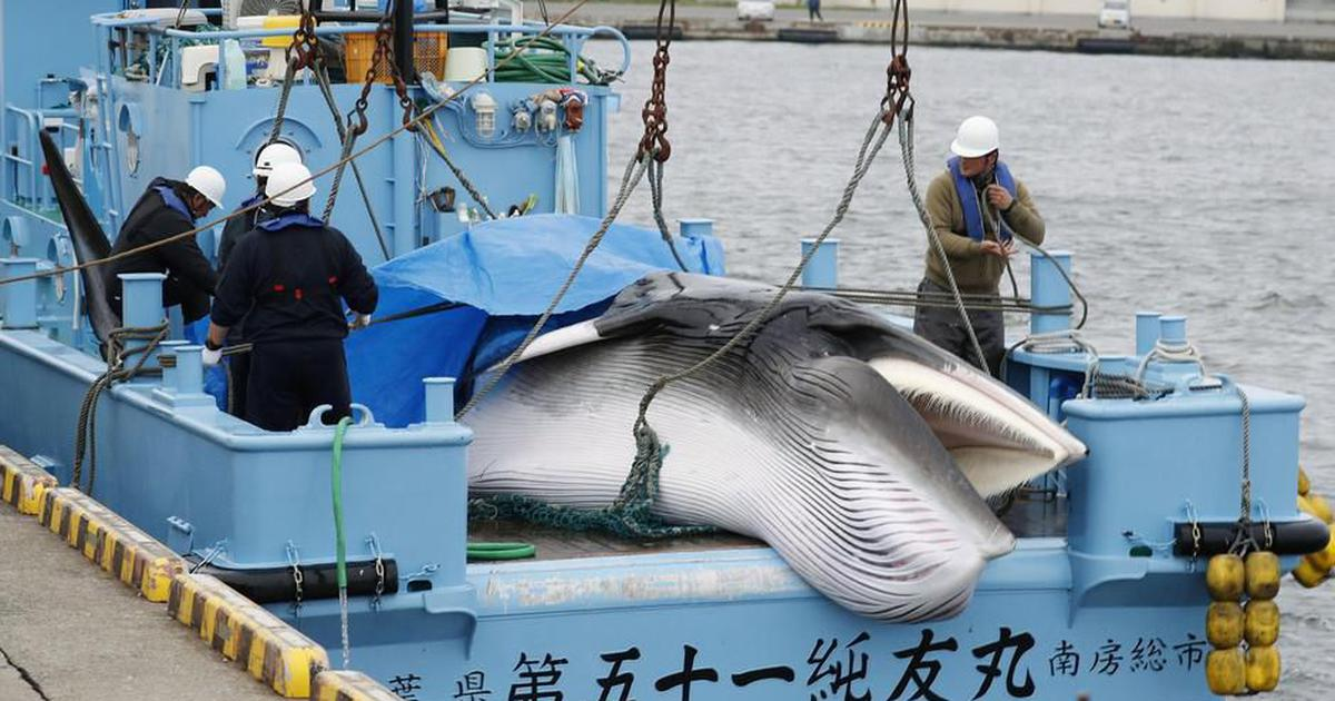 How should the world respond as Japan resumes commercial whaling after 30 years?