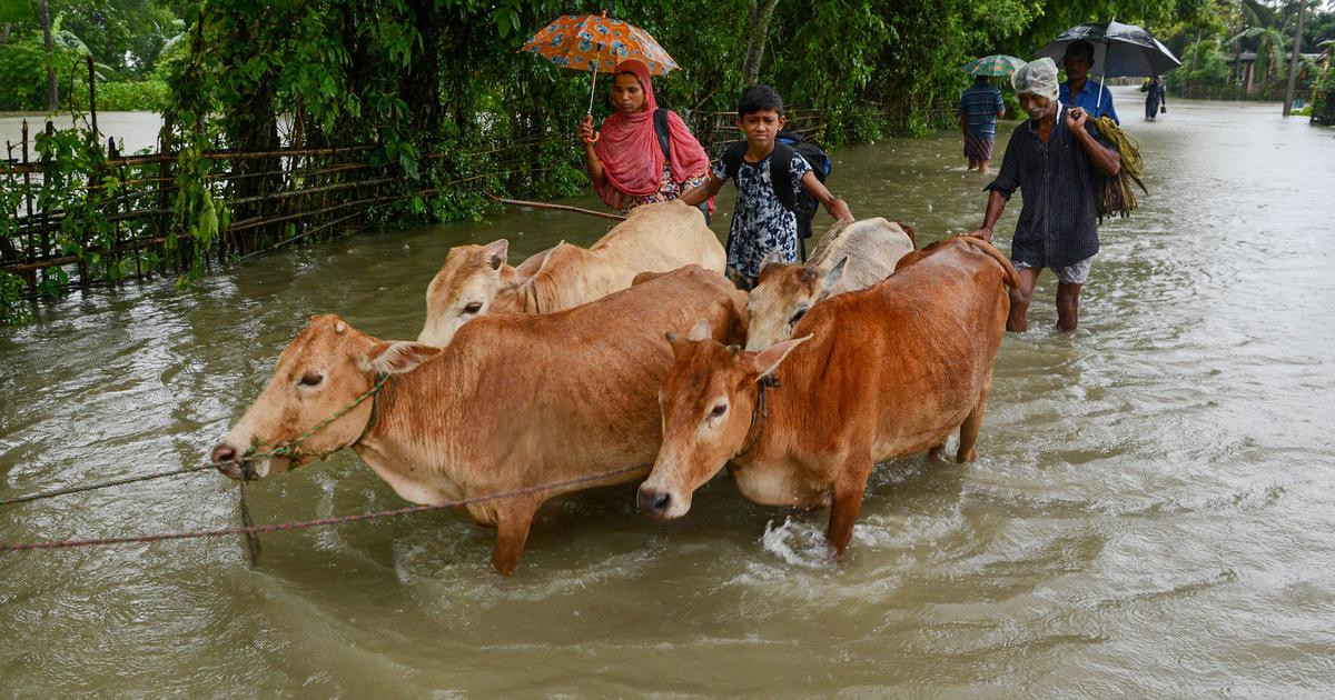 Assam to table bill to ban cow transportation outside state in next Assembly session, says governor