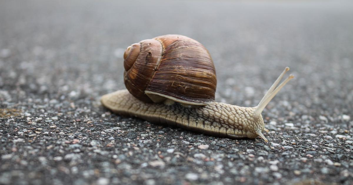 What is the Slow Movement? How can it change your life?