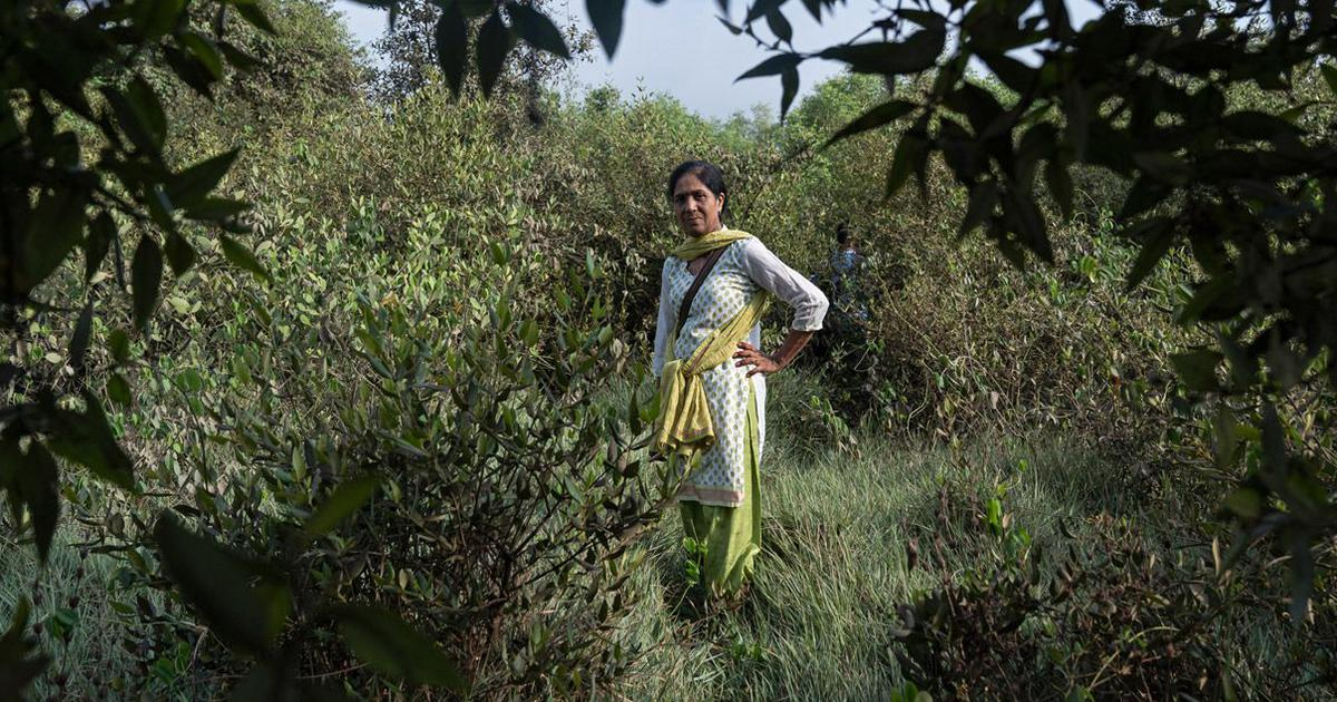 One woman's dogged campaign to protect Mumbai's mangroves