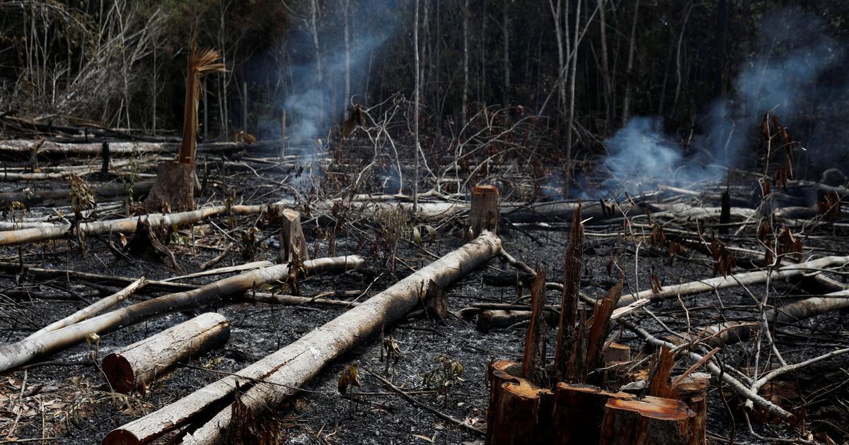 Amazon burning: Brazil President Jair Bolsonaro blames NGOs for wildfires ravaging rainforest