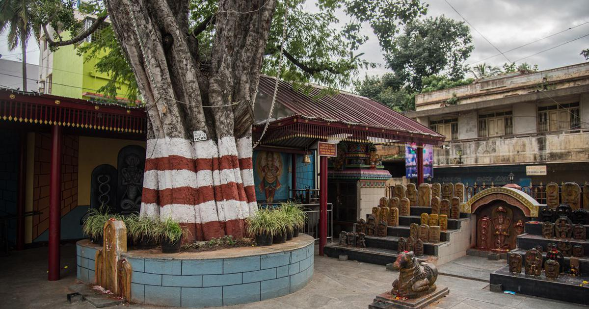 In rapidly growing Bengaluru, temples and kattes are sanctuaries for biodiversity