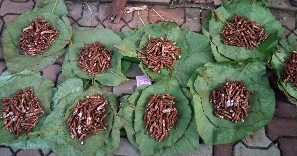 Goa's appetite for wild mushroom delicacies is threatening its forests