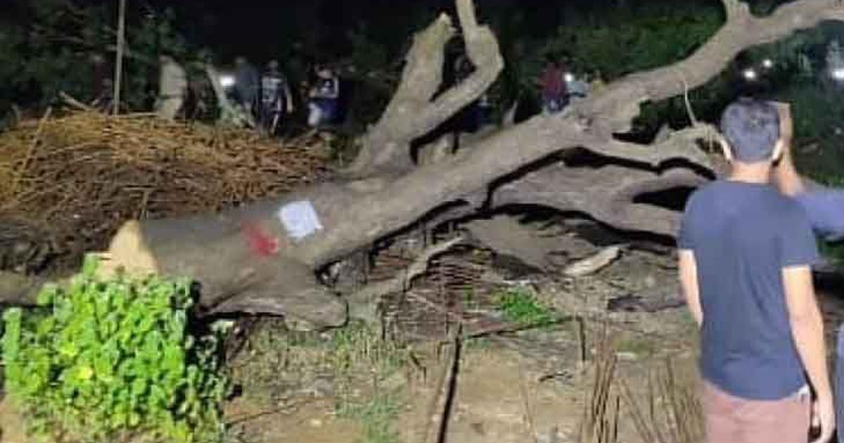 'Greed, hubris, foolishness': Bollywood actors tweet against tree cutting in Mumbai's Aarey Colony