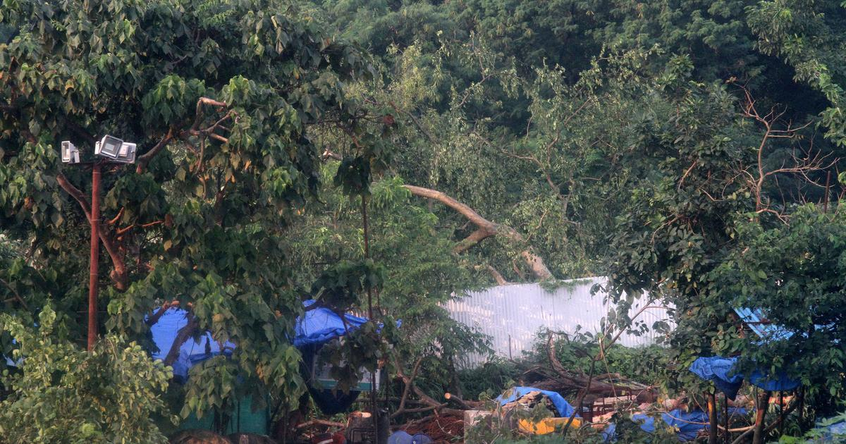 Mumbai: Opposition welcomes SC order, calls out government's haste in cutting trees in Aarey Colony