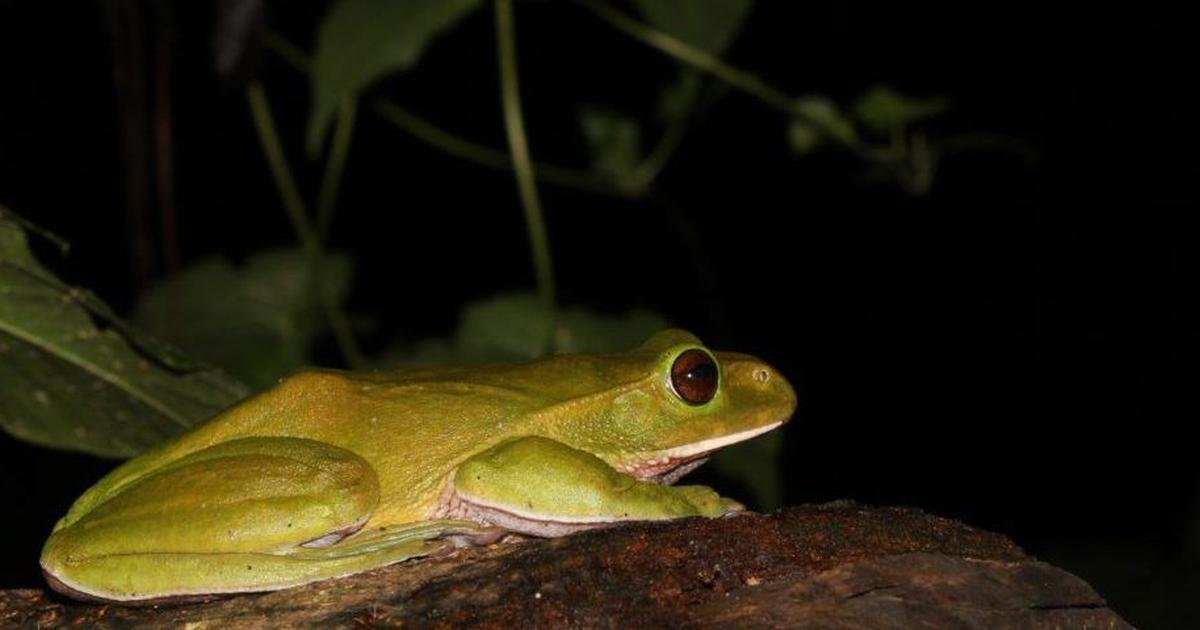 In Arunachal Pradesh, a researcher captured on camera a frog changing colours within minutes