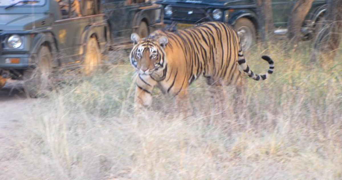 India's tiger reserves are browning and drying, says a new study