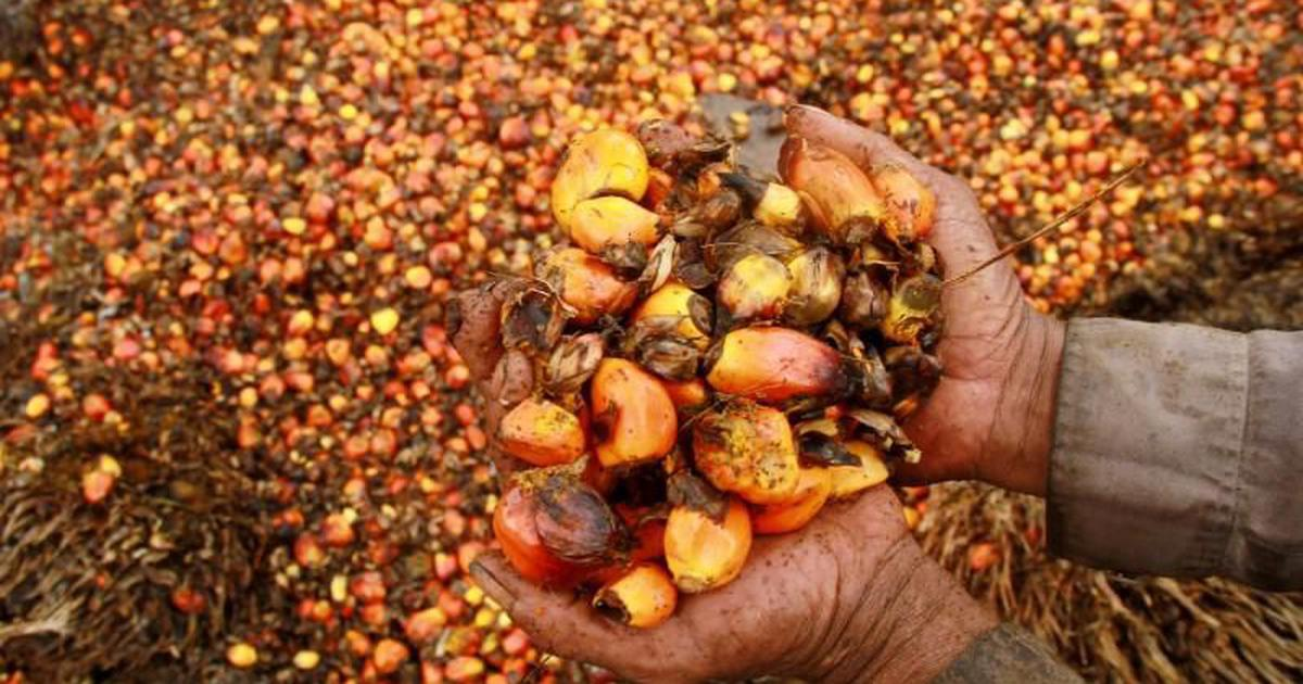 As world's largest importer of palm oil, India has a duty to push for ethical production practices