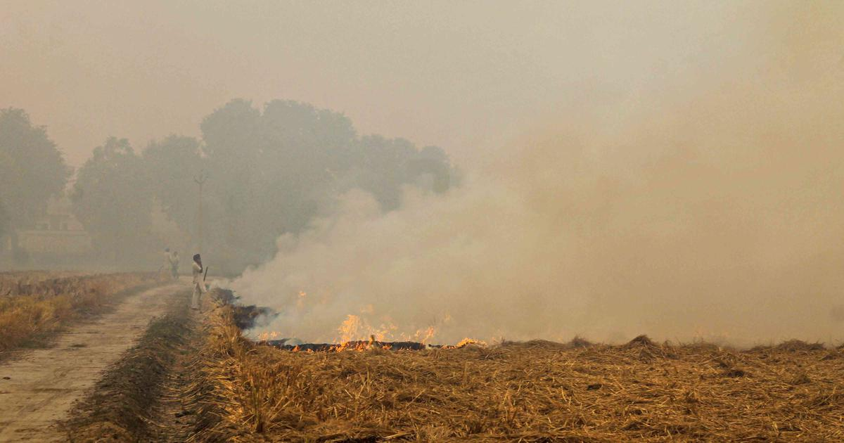 Punjab records 73,883 incidents of stubble burning – highest in 4 years – amid farm laws protests