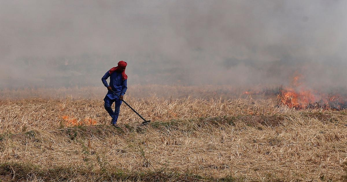 Air pollution: SC to consider if MSP can be withheld for farmers who indulge in stubble burning