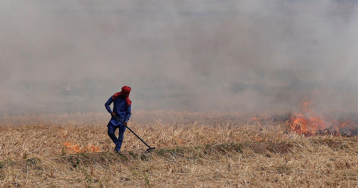 The pollution question: What will it take for farmers in Punjab and Haryana to stop burning stubble?