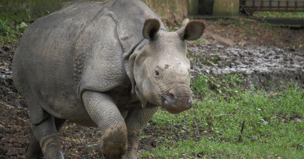 The Assam State Zoo can teach the rest of India (and the world) a lot about rhino conservation