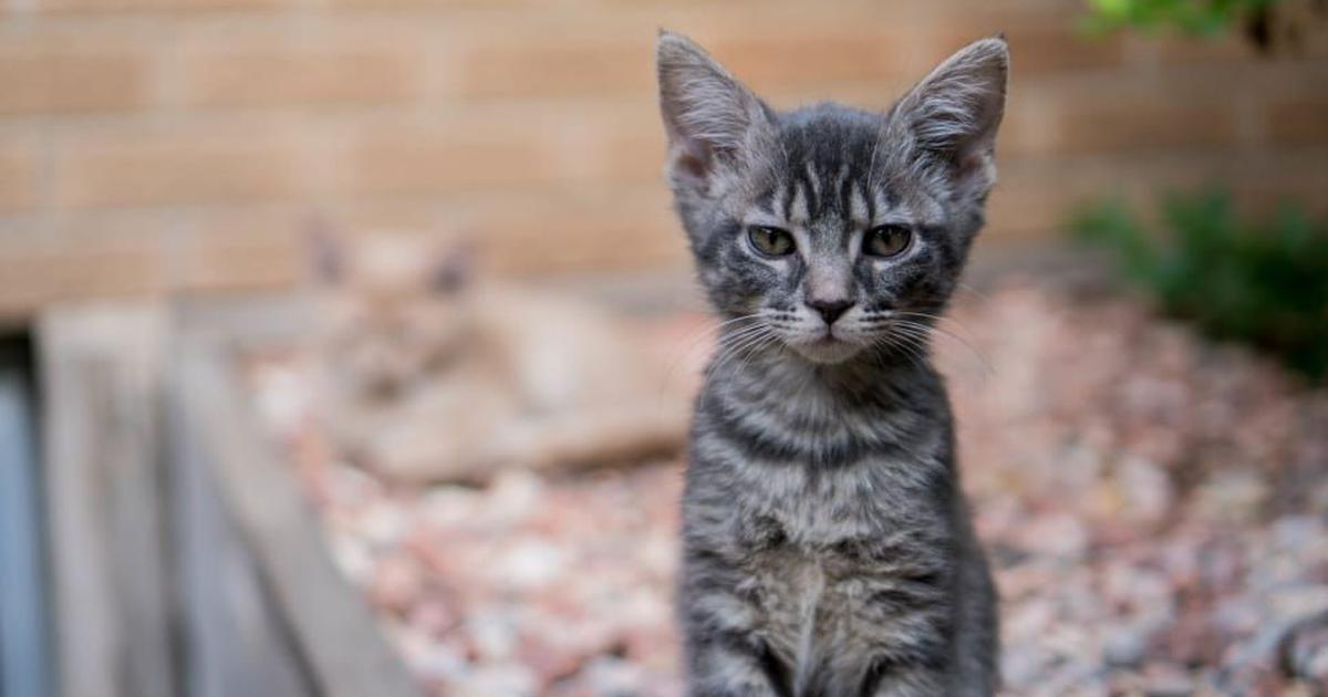 Coronavirus: Five cats in Covid-19 ward die in Kerala, vital organs sent for examination