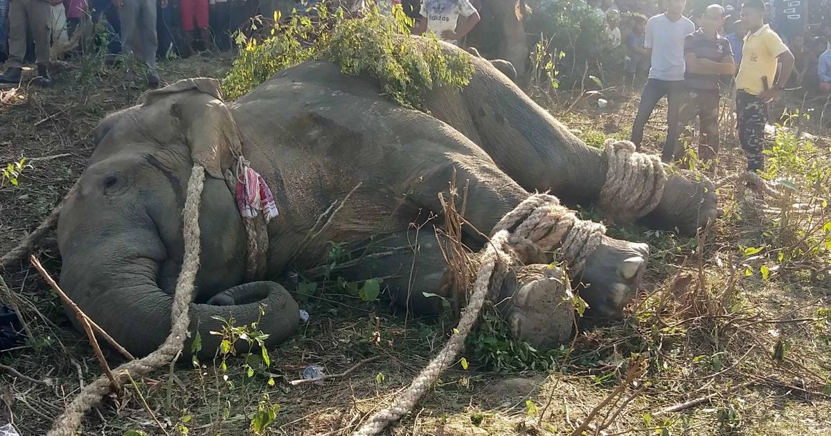 Assam: Captured, relocated elephant dies of cardiac arrest