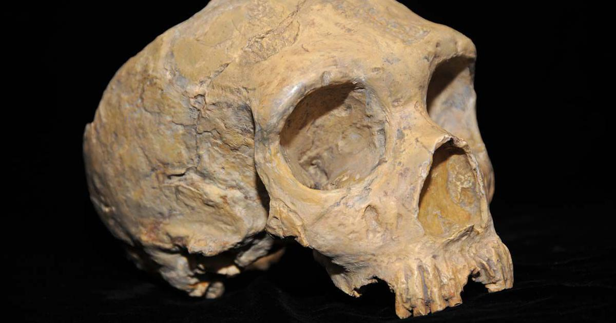 300,000 years ago, nine human species lived on Earth. Did homo sapiens exterminate the others?