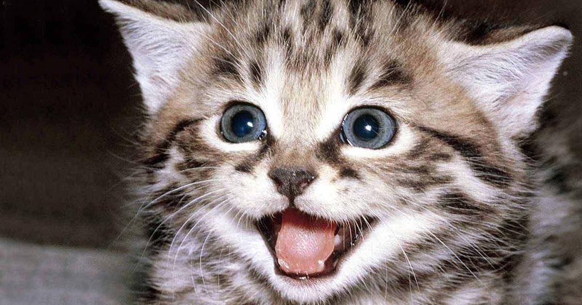 You know that warm, fuzzy feeling evoked by cat videos? There is a Sanskrit word to describe it