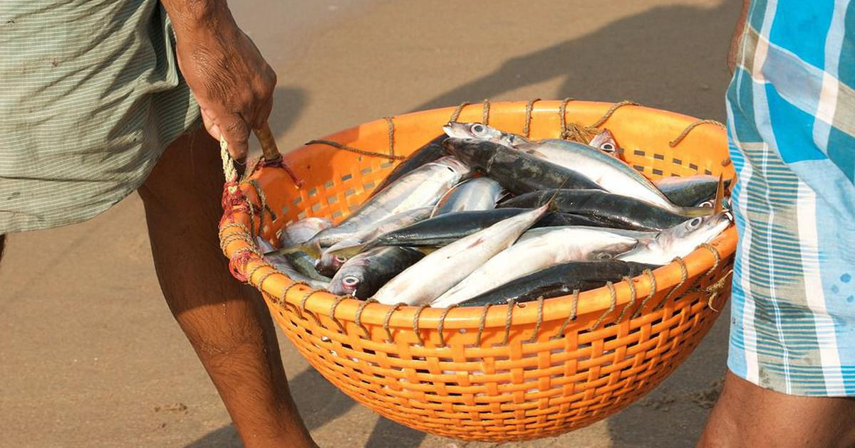 In Karnataka and Andhra Pradesh, the lucrative fish feed industry is killing traditional fisheries