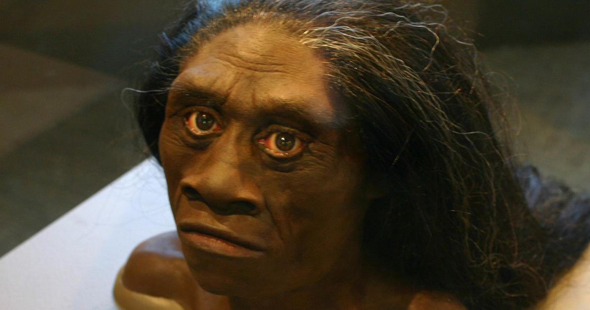 Bones found in Indonesia suggest that 'real-life hobbits' shared Earth with modern humans