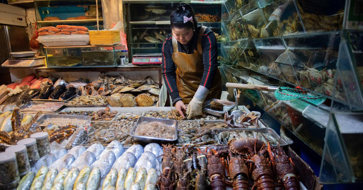 Covid: China temporarily suspends fish import from Indian firm after it detects virus on packaging