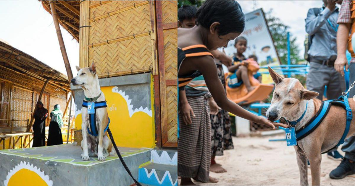 Meet Foxtrot, an Instagram puppy that has become a mascot for Bangladesh's Rohingya refugees