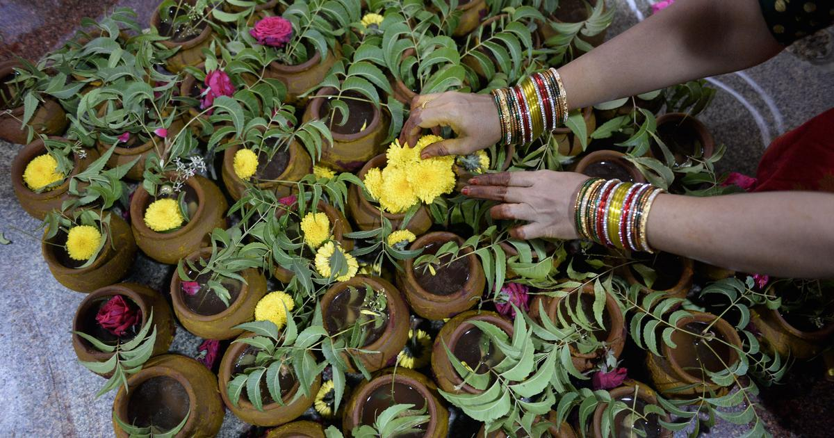 India is home to over 8,000 species of medicinal plants – and they're increasingly under threat