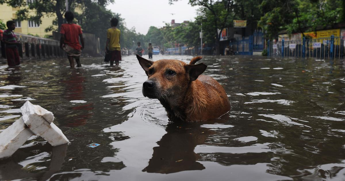 Despite a decade-old Supreme Court order, nobody is really looking after India's stray animals