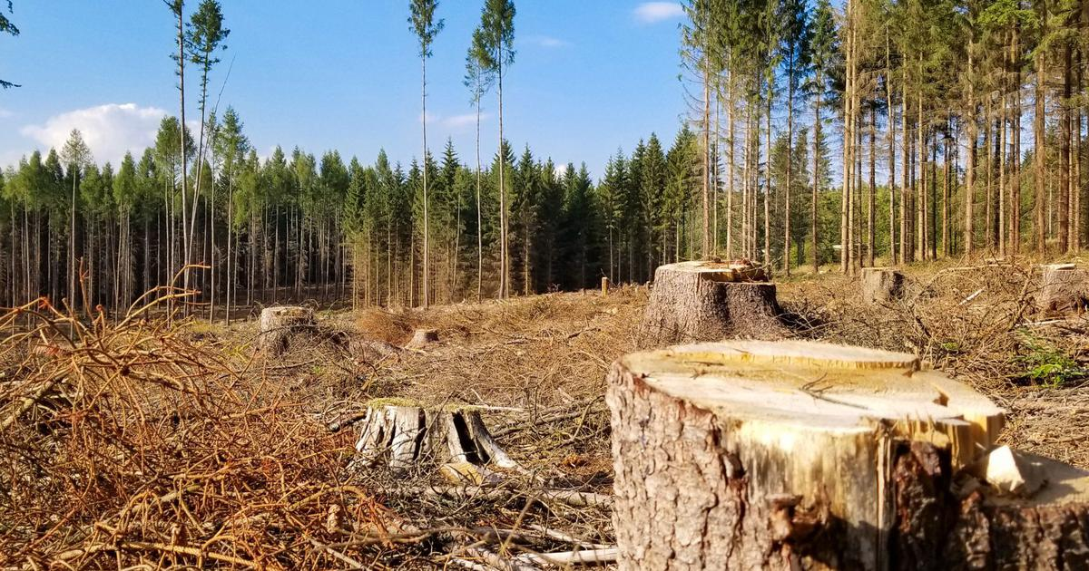One of the biggest threats to the world's forests and biodiversity is farming