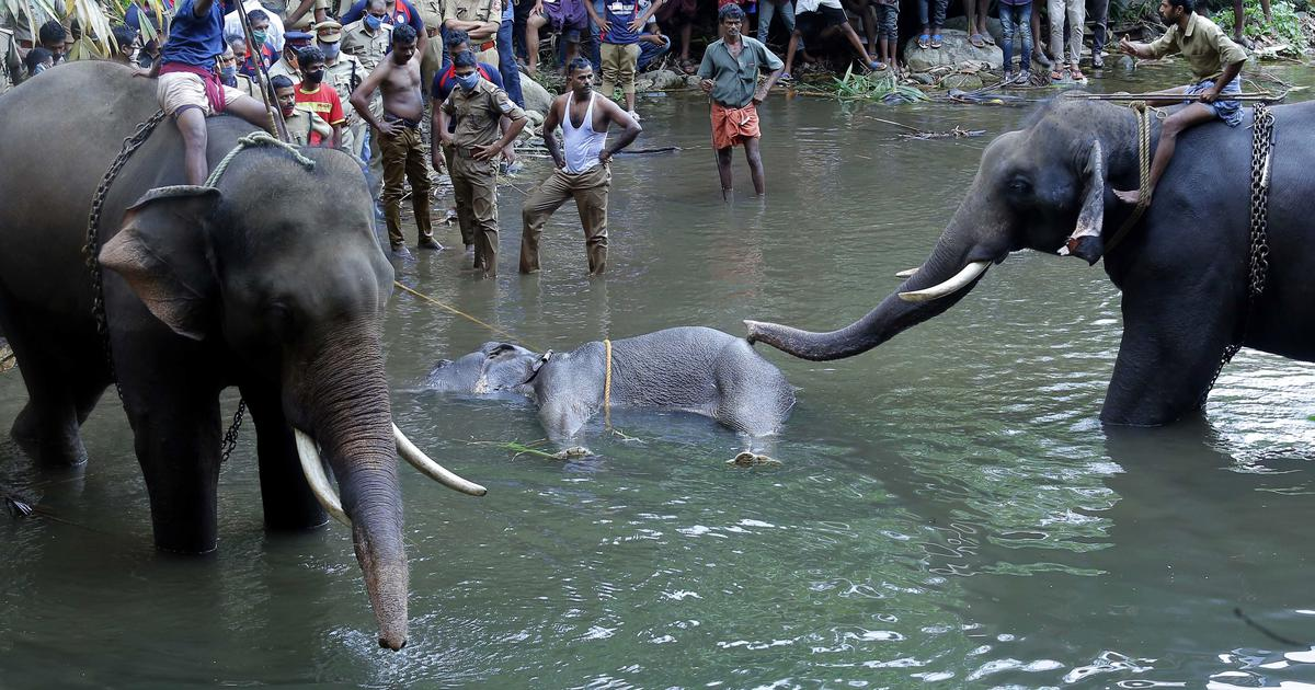 Kerala: Elephant may have accidentally eaten firecracker-stuffed fruit, says environment ministry