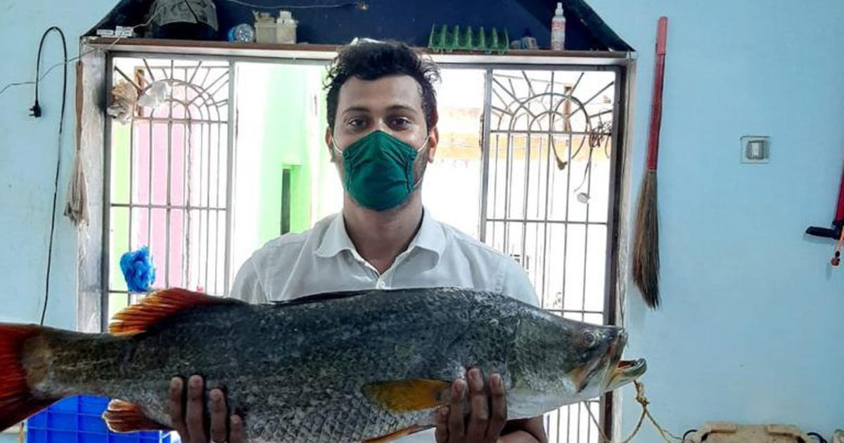 How a bunch of Mumbai's fishers kept their businesses afloat amid coronavirus lockdown